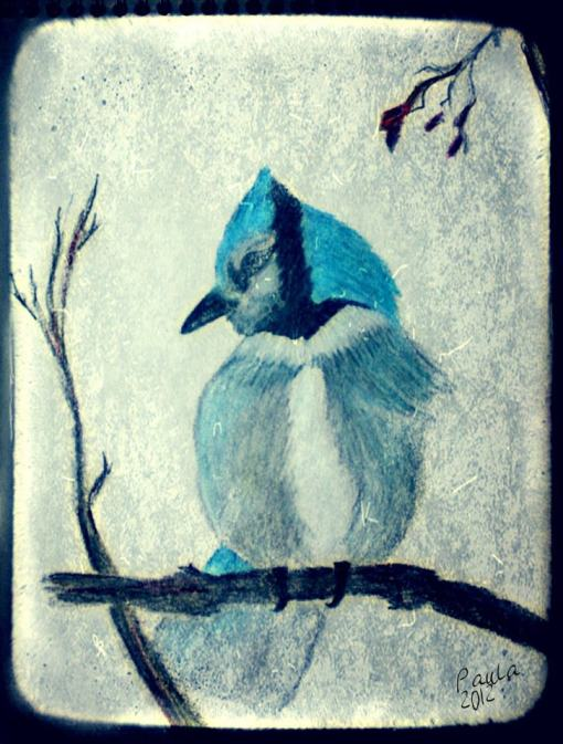 Pd Lietz ©  Blue Jay  pencil-crayon