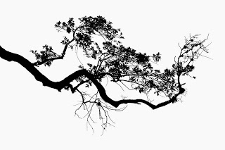 25 Best Ideas about Tree Drawings on Pinterest  Trees