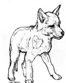 coyoteicon
